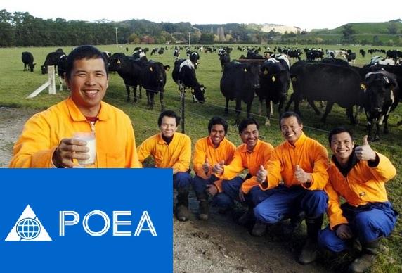 poea jobs in new zealand