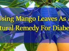 Using-Mango-Leaves-As-A-Natural-Remedy-For-Diabetes