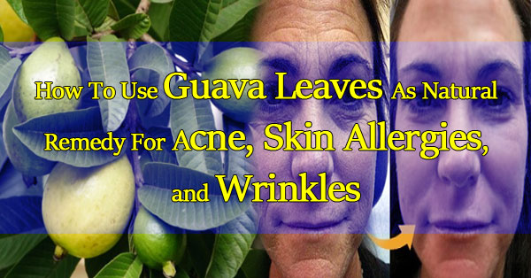 using-guava-leaves-as-a-natural-remedy-for-acne-skin-allergies-and-wrinkles