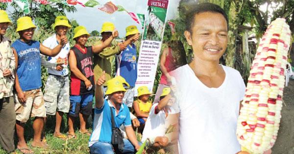 former-ofw-now-earns-bigger-as-a-farmer-of-bicolor-corn