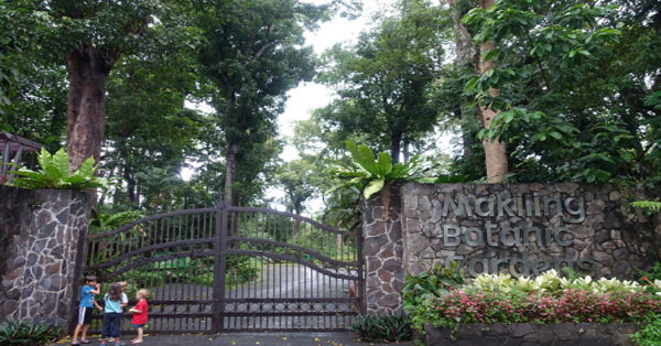 Inhale-fresh-air-at-the-Botanical-Garden-makiling-los-banos-laguna