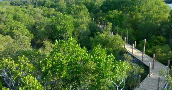 calatagan-mangrove-Forest-Conservation-Park